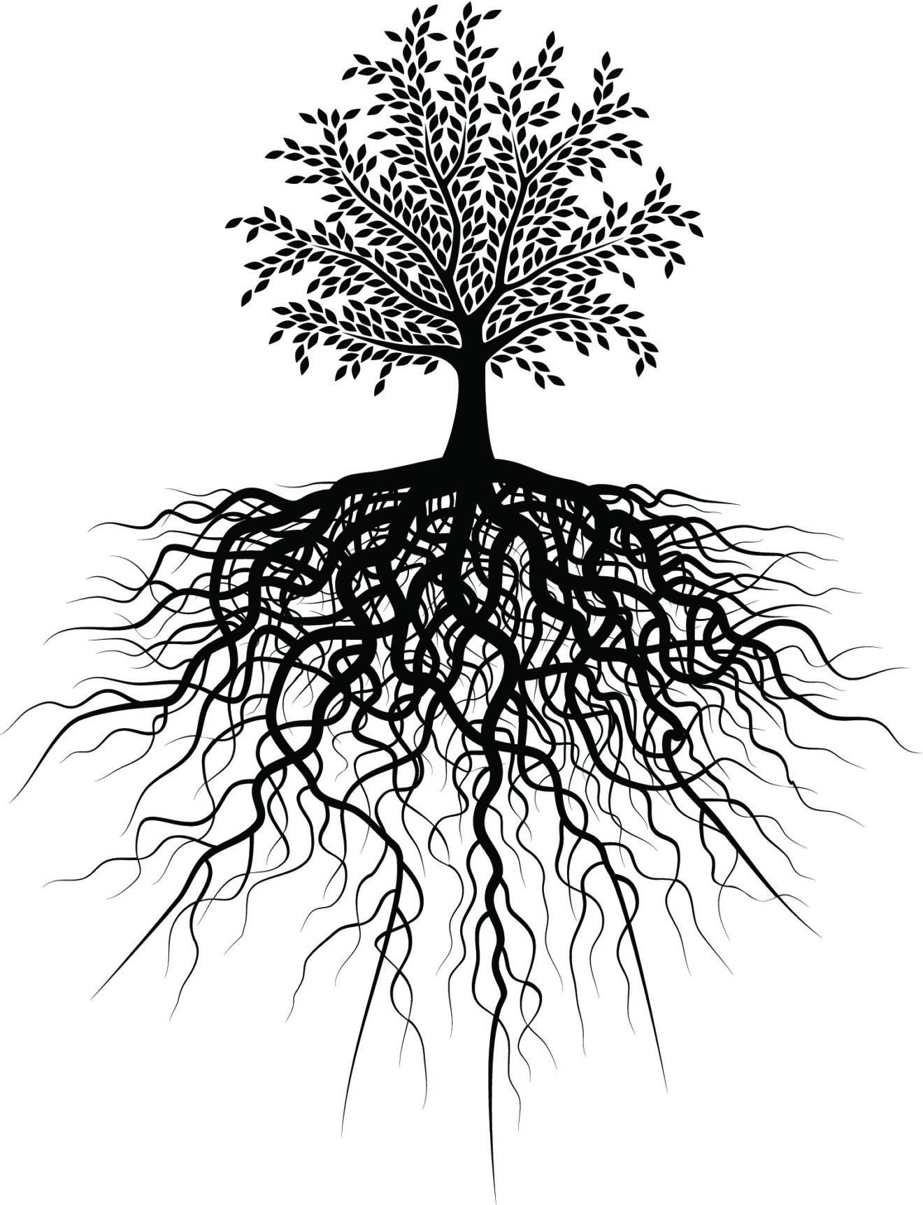 tree-big-roots